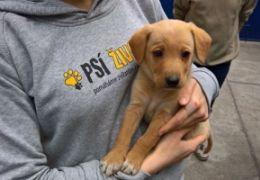 Díky podporovatelům a dárcům jsme pomohli téměř 150 zvířatům!