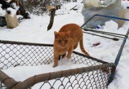Pomoc zvířatům na ulici v zimním období